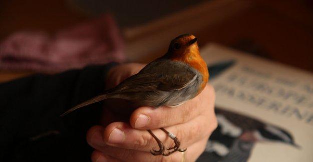 Kuş Cennetinde halkalama çalışmaları