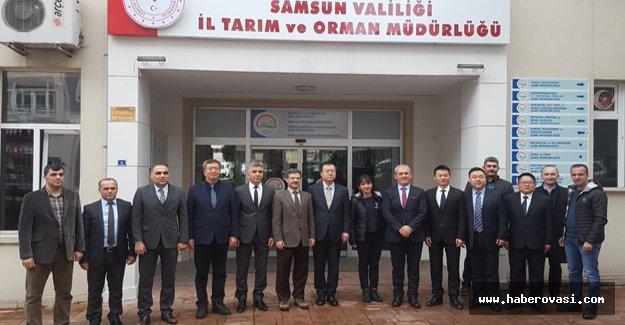 Türkiye'den Çine balık ürünleri ihracatı