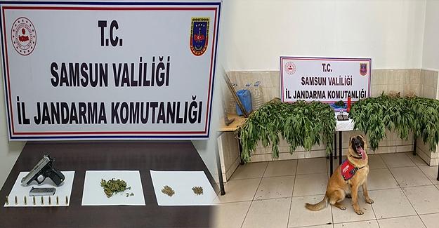 Tekkeköy ve Vezirköprü İlçelerinde uyuşturucu Operasyonu
