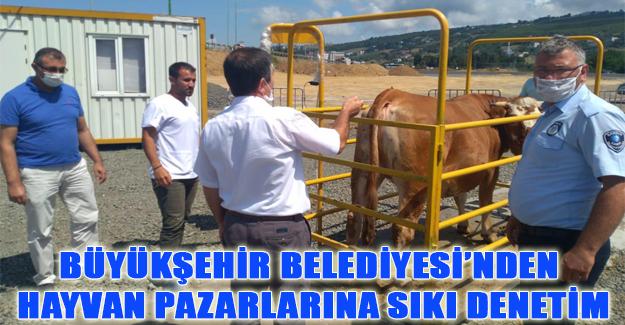 Samsun`da Hayvan pazarında sıkı denetim