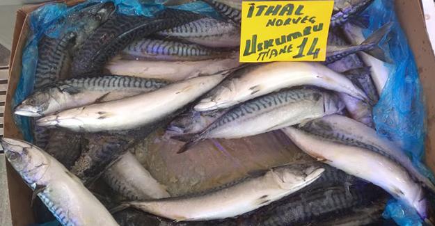 Atakum' Da Balık Bereketi