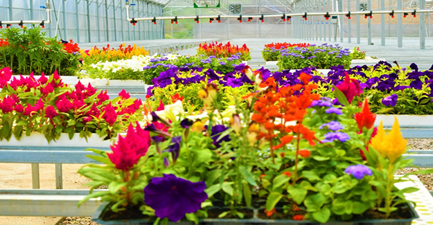 Çöpler Çiçek Oldu Rengarenk Açtı