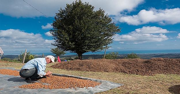 Ferrero Değerli Tarım Ekibi Uyardı