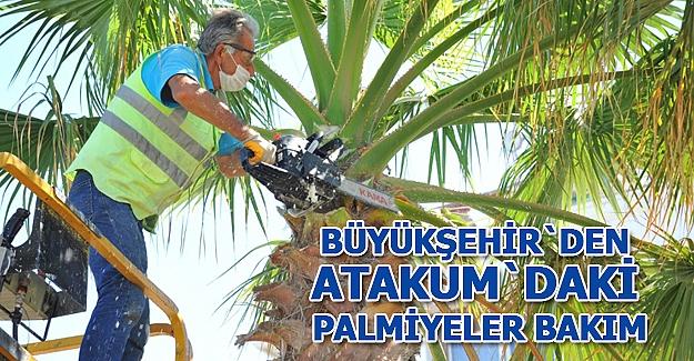 Atakum sahilindeki palmiyelere Bakım