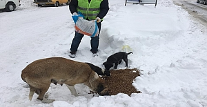 Sokak köpeklerine şefkat eli