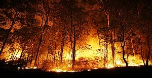 Türkiye'de yanan orman alanlarının %98'i insan kaynaklı