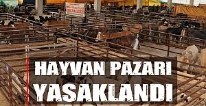 Samsun'da ve İlçelerinde Hayvan Pazarıda yasaklandı